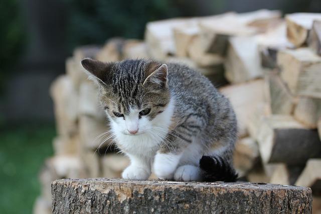 Mačka je perfektný domáci miláčik