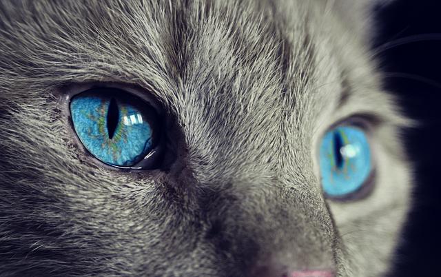 Druhá mačka do domácnosti