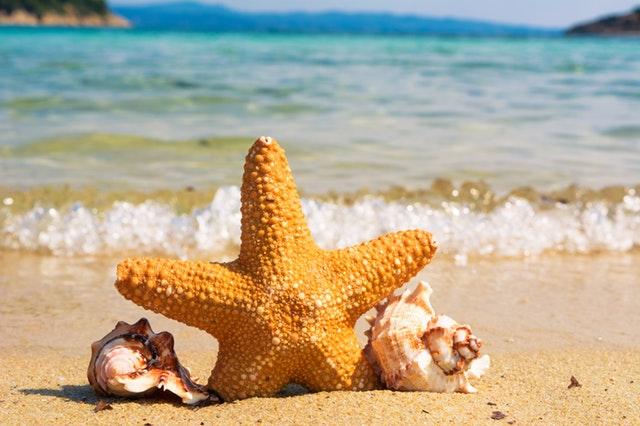 mušle a morská hviezdica na pláži