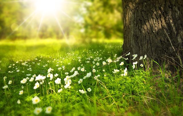 Založte si živý trávnik