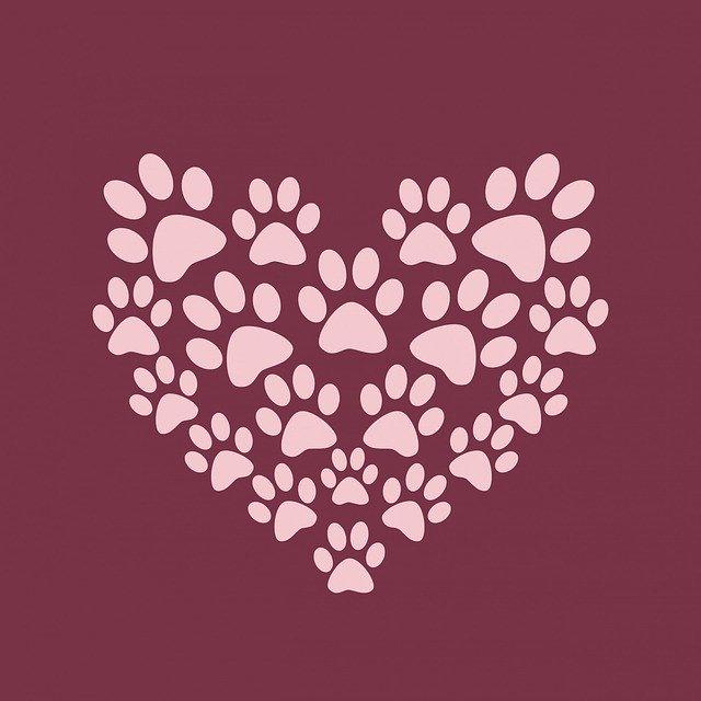 láska k zvieratám.jpg